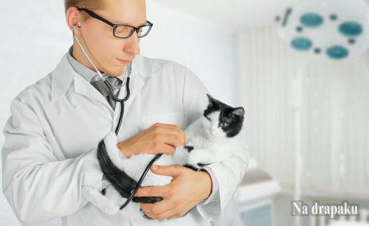 Jak często chodzić z kotem do weterynarza?