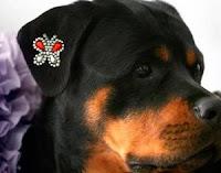 Tatuagem para cachorro vira moda nos Estados Unidos; veja fotos
