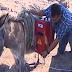 Αγρότες τοποθέτησαν φωτοβολταϊκά πάνω σε γαϊδούρια