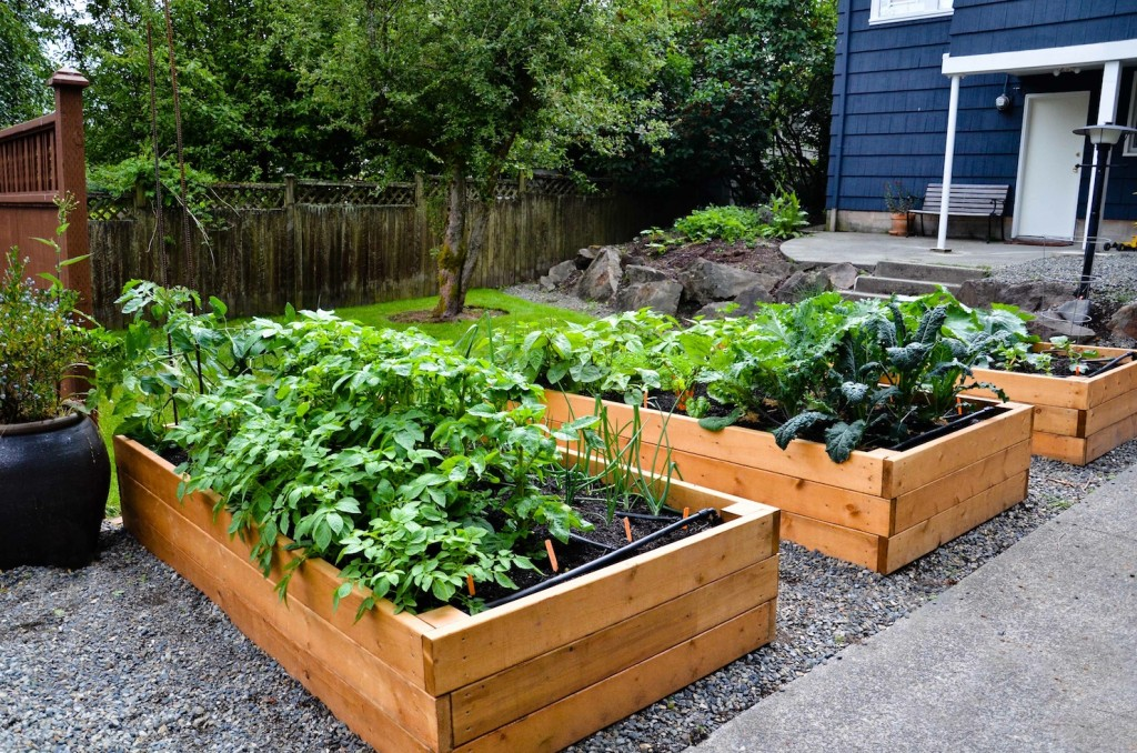 Produce from urban gardens could contain lead world for Garden designs with raised beds