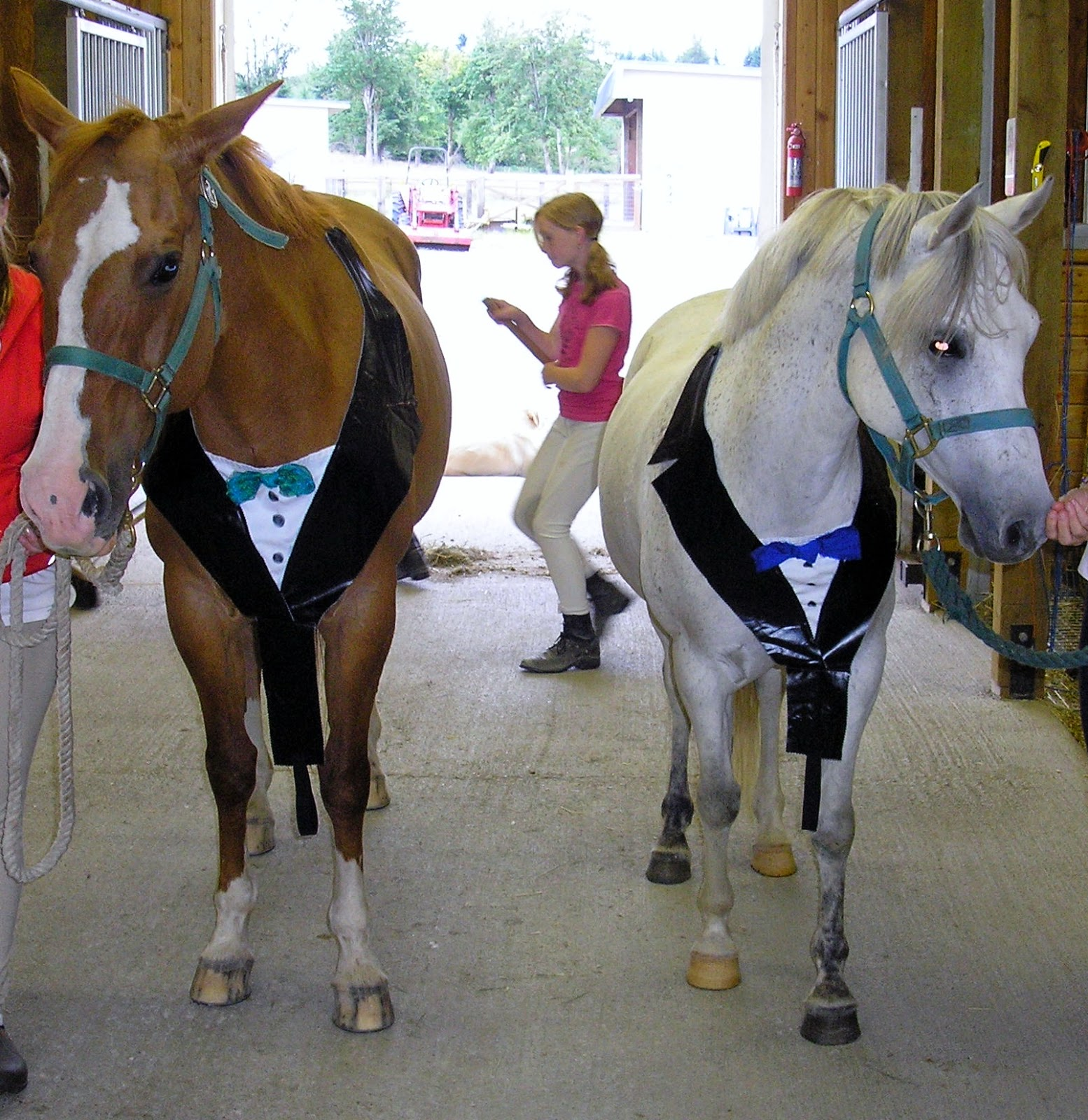 Equestrian Blog Of The Day - A Blonde, Brunette and a Redhead