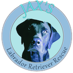 a great non-profit cause-jax lab dog rescue