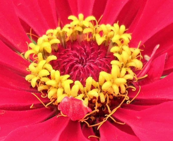 Сердце цветка! )))