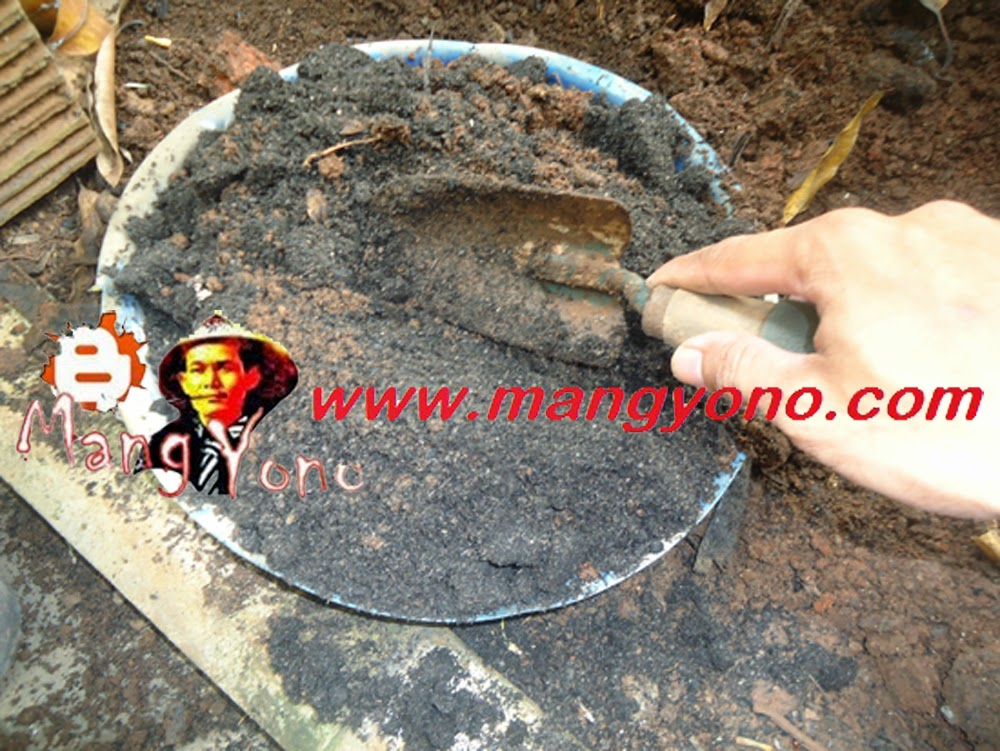 Pengadukan media tanah halus, pupuk organik halus atau arang sekam padi
