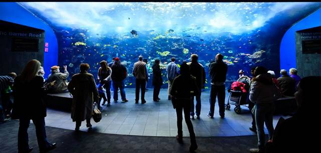 The world's largest aquarium is located in Atlanta, Georgia. It houses more than 120,000 animals, representing 500 species in 8.5 million gallons of water. There are 60 different habitats with 12,000 square feet of viewing windows, and it cost $290 million to build.