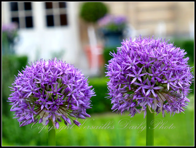 Flowers musée Lambinet Versailles
