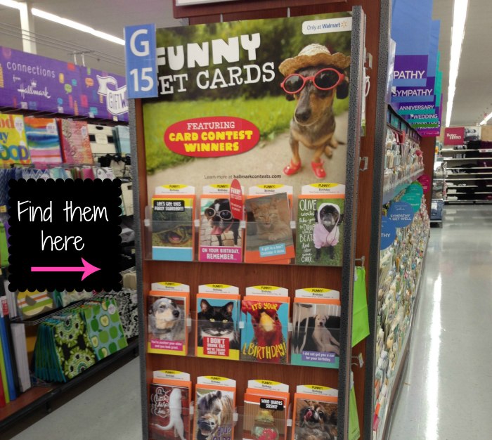 Hallmark Funniest Pets Cards, #FunnyPetCards, #CollectiveBias, #shop