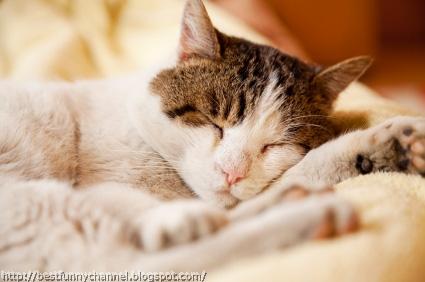 Nice sleeping cat.