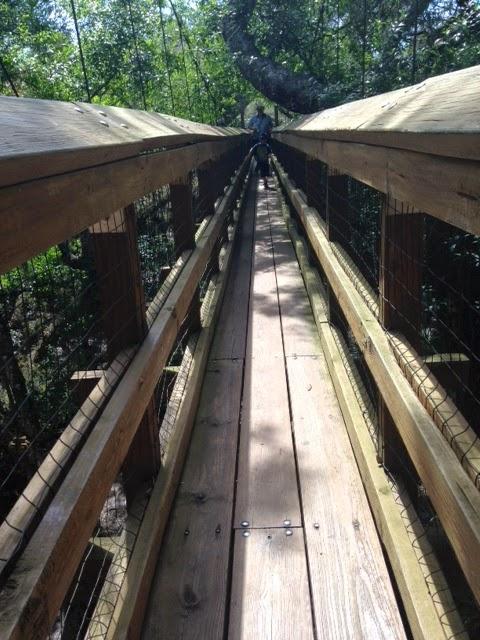 hiking in Myakka River State Park, Canopy bridge Myakka River State Park