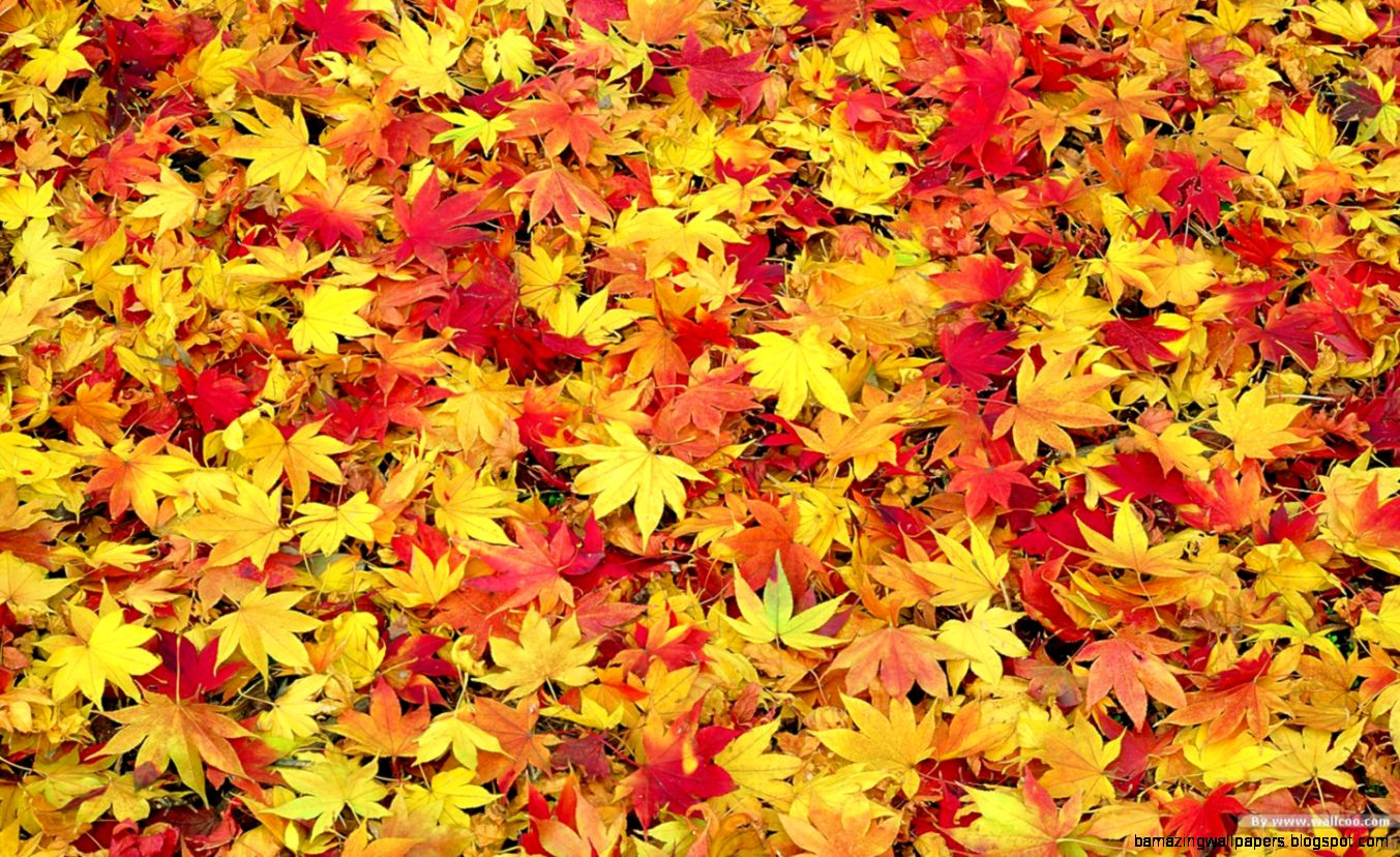 Fall Leaves Wallpaper Desktop   WallpaperSafari