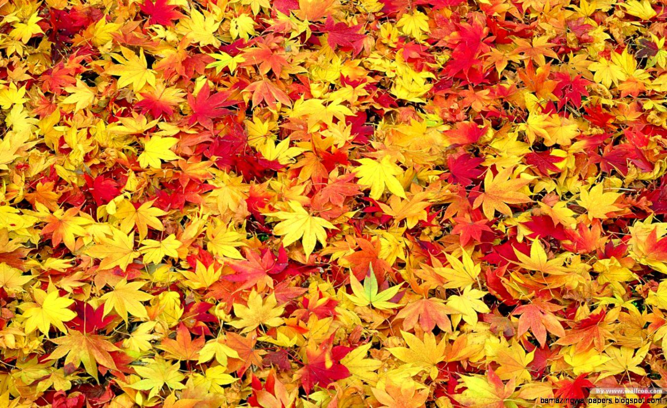 Fall Leaves Wallpaper Desktop   WallpaperSafari