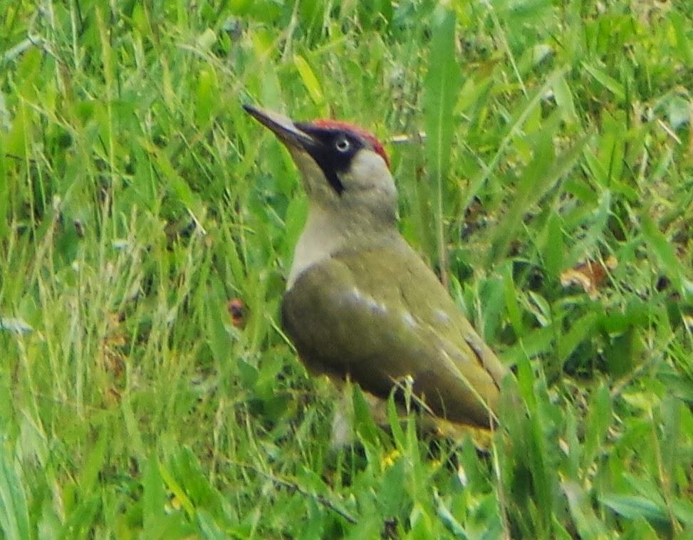 Mini ornitho comment s 39 appelle ces oiseaux for Photo oiseau