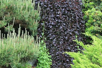 Dunn Gardens - Fujitaro Kubota