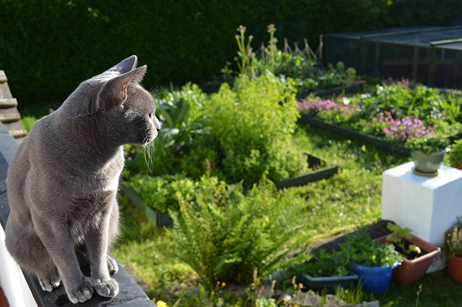 How Do I Stop Cats Messing In My Garden