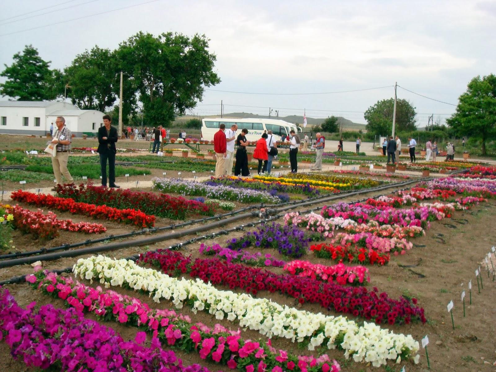 Thm tecnolog as de la horticultura mediterr nea los for Plantas ornamentales del ecuador