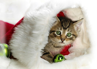 Christmas cat Wallpapers