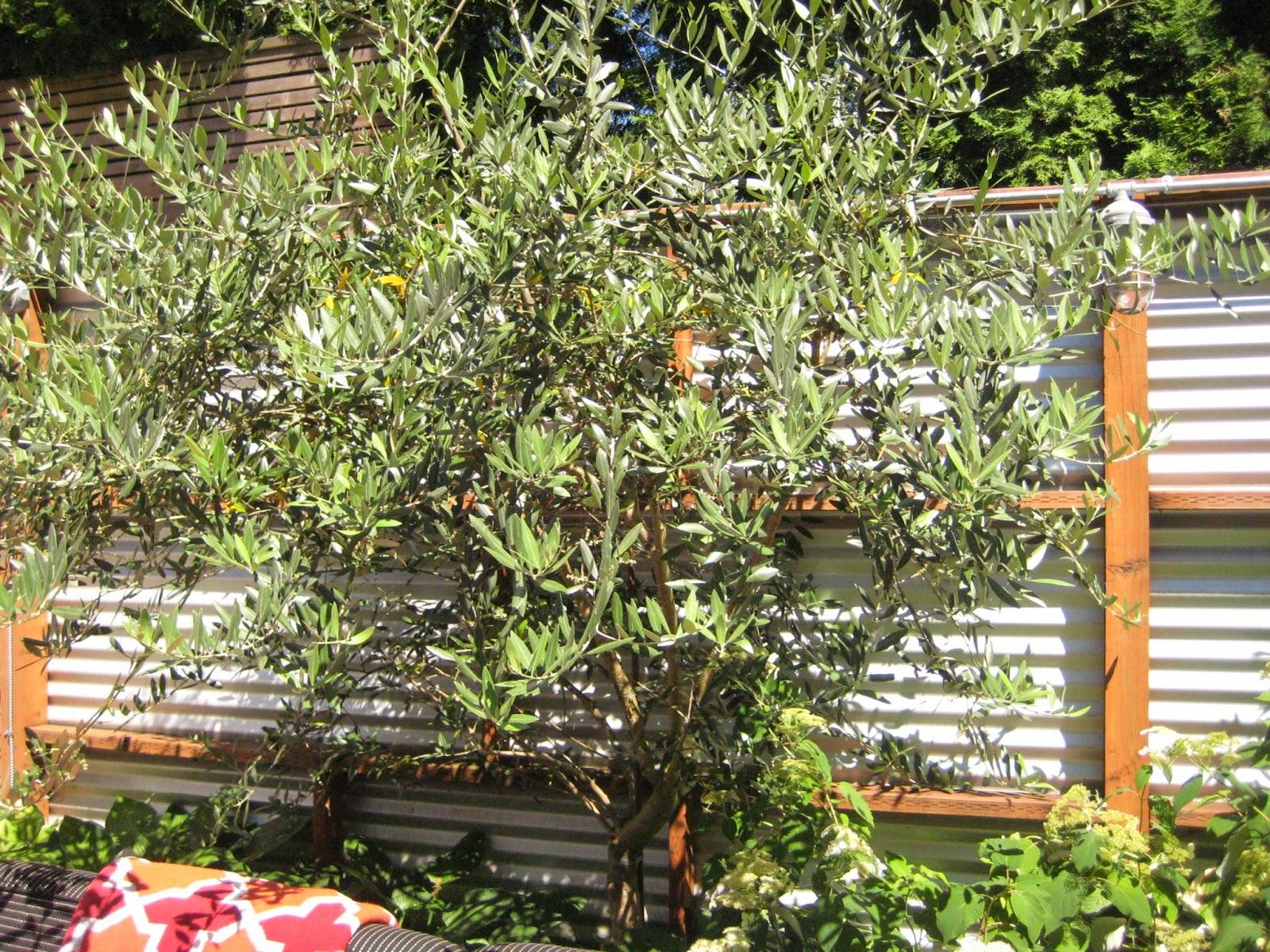 Garden Blogger 39 S Fling Portland Jj De Sousa 39 S Garden