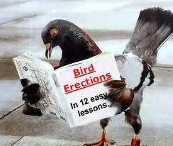 bird%2Bboner.jpg
