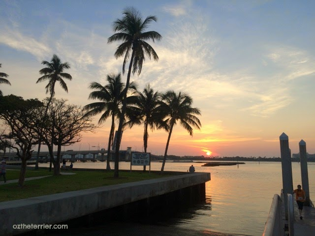 Oz the Terrier | Florida Sunrise at Intracoastal waterway