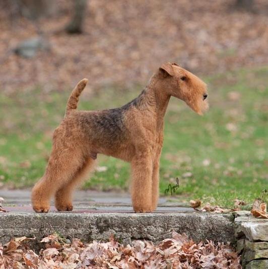 Acadia Dog Breed