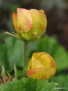 Geum Beach House Apricot