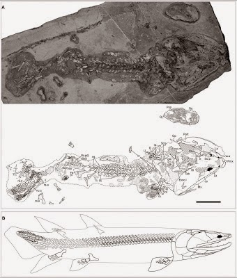http://sciencythoughts.blogspot.co.uk/2012/03/new-tetrapodomorph-fish-from-devonian.html