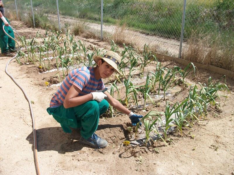 Pcpi actividades auxiliares en viveros jardines y for Produccion de viveros