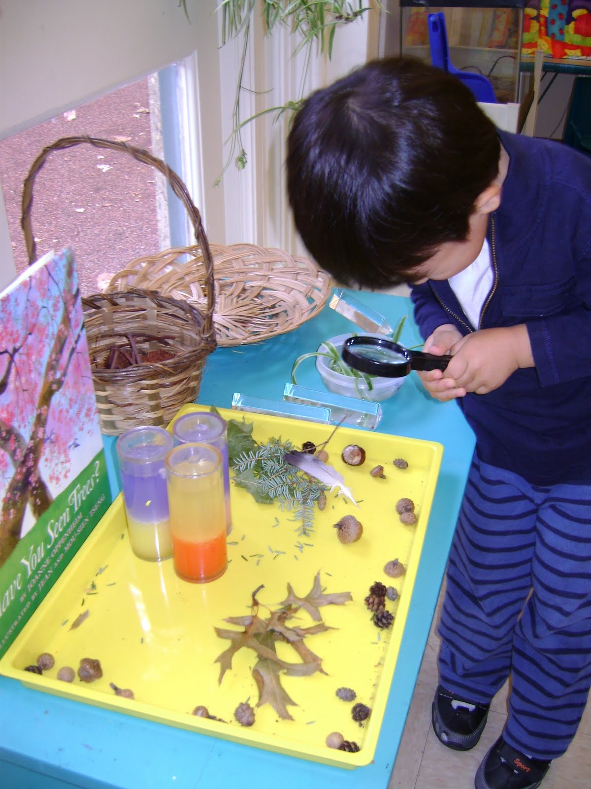 Classroom Ideas Science : Science social studies centers setting up the