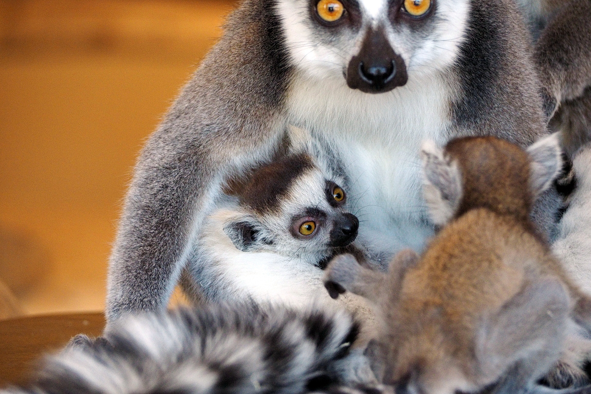 "Tierpark Bochum - ""Fee ist mein Name"""