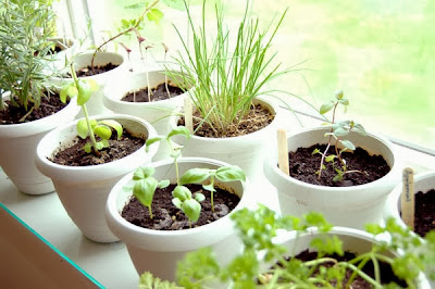 Finding the Perfect Indoor Herb Garden