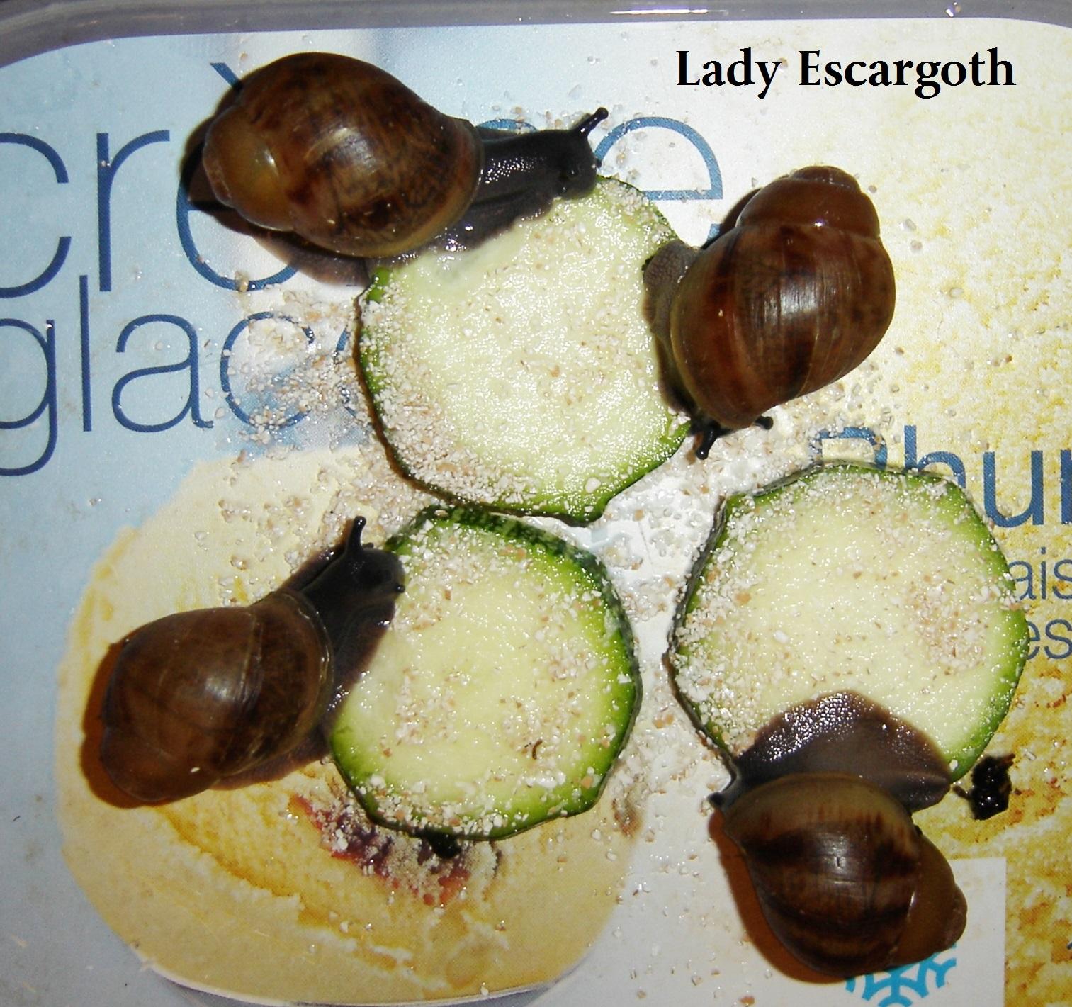 bébés archachatinas marginata ovum