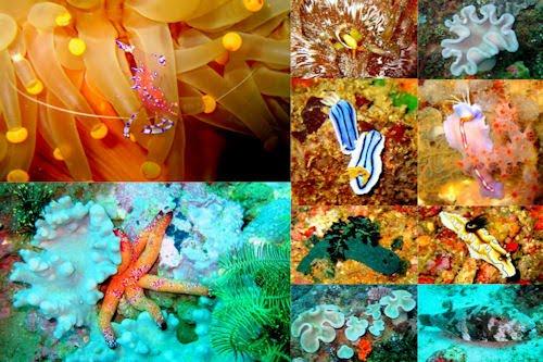 Peces, corales y arrecifes en el fondo del mar VI