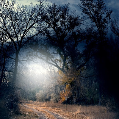 woods surrounded by night