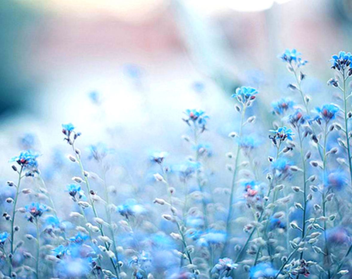 Blue Flower Photography Tumblr