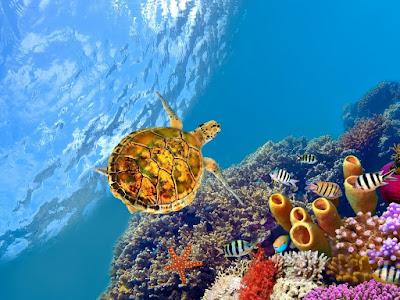 Tortuga bajo el agua - Turtle underwater - Free Wallpaper