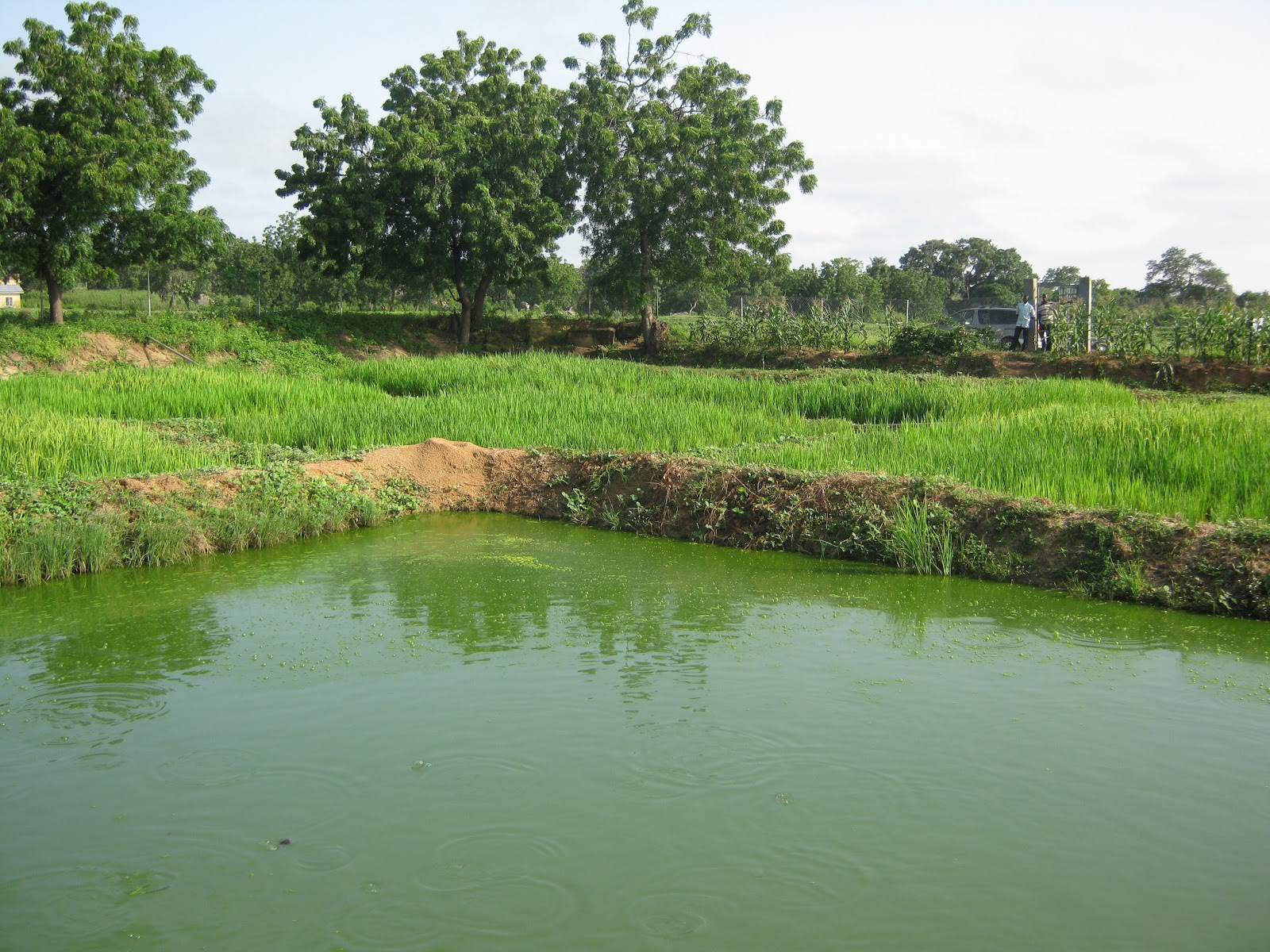 National inst for freshwater fisheries research research for Freshwater pond fish