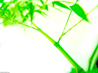 Bamboo Wallpaper - Bamboo Leaf Wallpaper