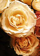 My Roses pictures in Sepia
