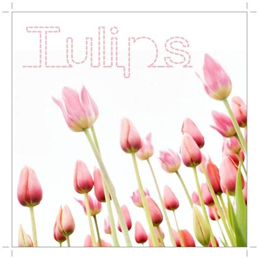 tulpaner, årets första tulpaner, tulips, the first tulips of the year