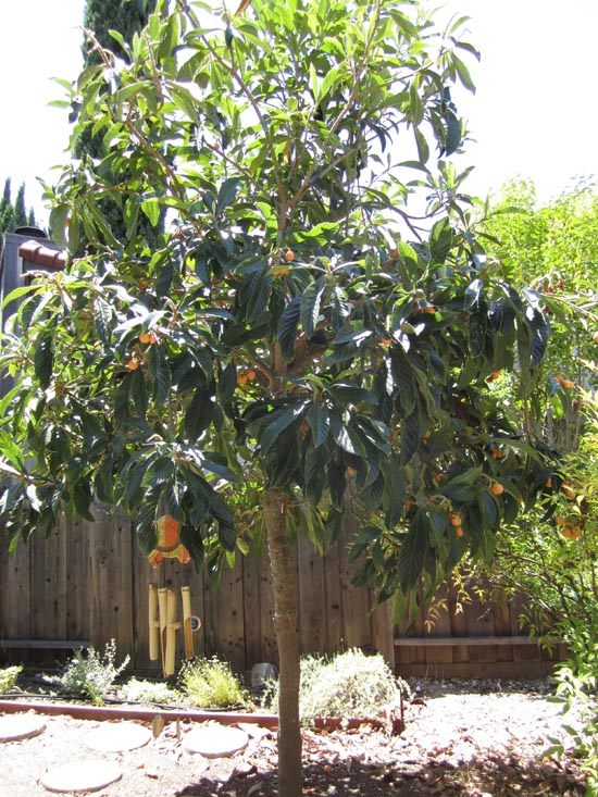 how to get rid of wild plum trees