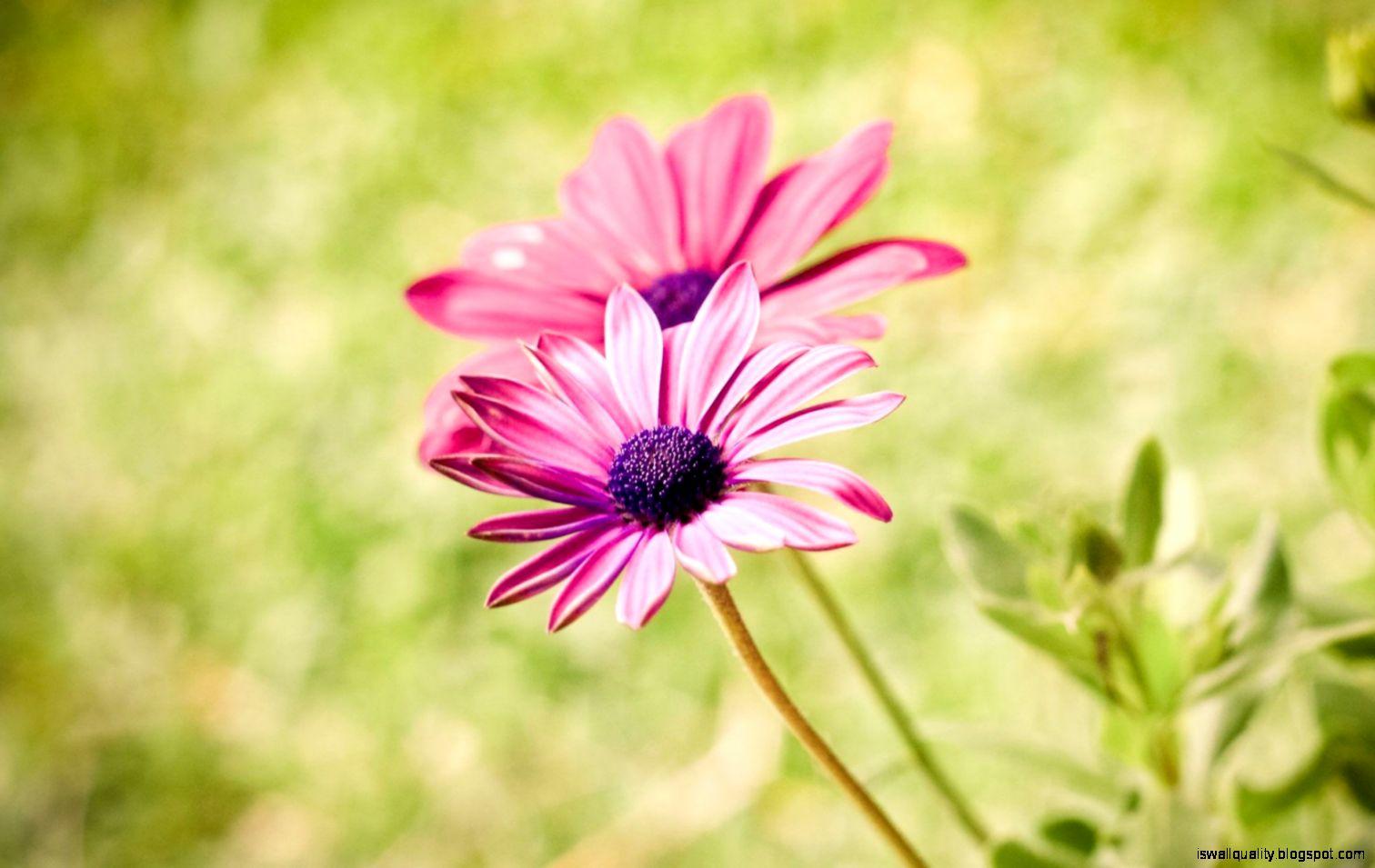 Free Summer Desktop Wallpaper Background Purple Flowers tyagiii