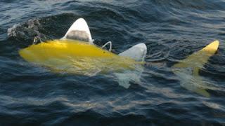 Robot Ikan Untuk Kurangi Polusi