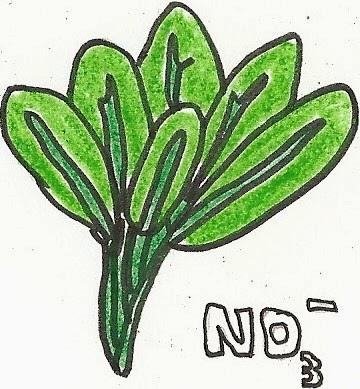 Recomendación hortalizas AESAN