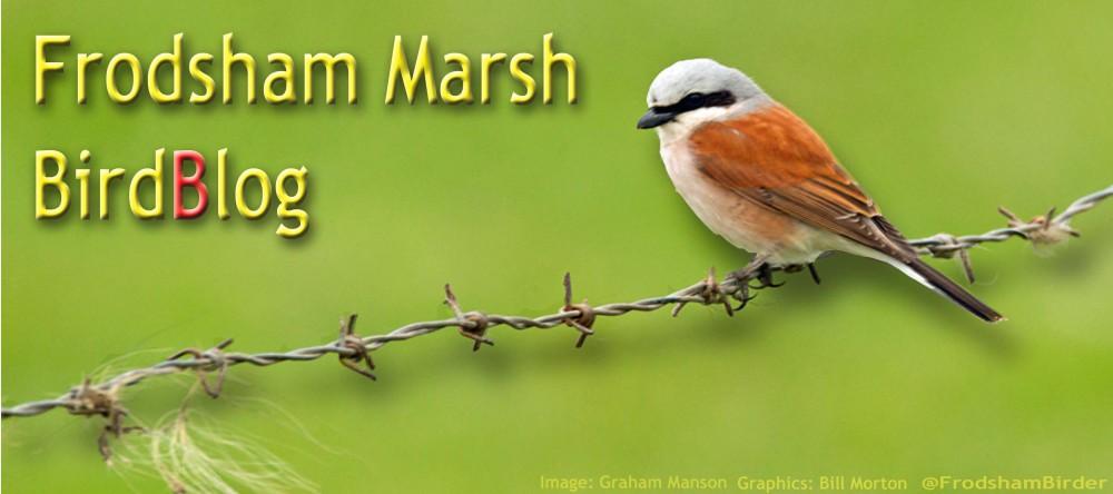 FRODSHAM MARSH BLOG