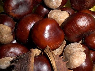 Colores marrones de la castaña, o también llamados castaños.