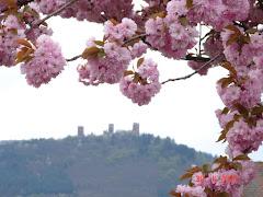 Wiosna za chwilke...