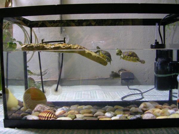 Как сделать аквариум для черепахи в домашних условиях