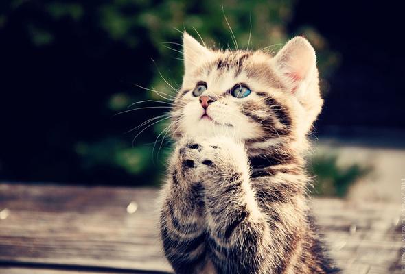 Cute Kitten, funny cat pics