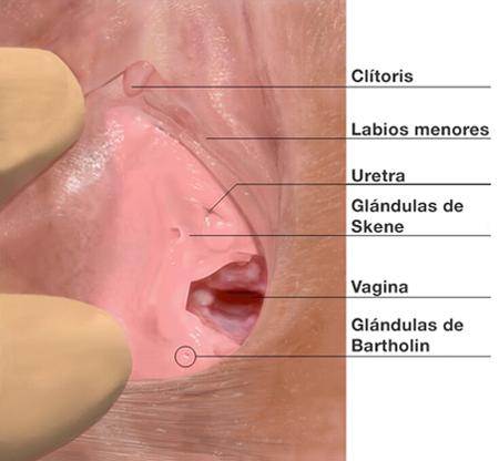 http://3.bp.blogspot.com/-v_OyMiPnvOc/TuXoV1CY0WI/AAAAAAAAEMs/lgRkRf2CTVc/s1600/vulva-mujer.png