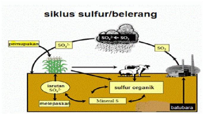 Daur Belerang/Sulfur (S)